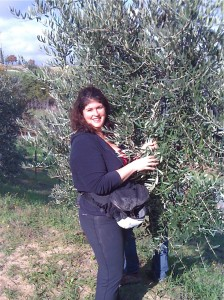 Jennifer Criswell harvests olives near Montepulciano, Tuscany.