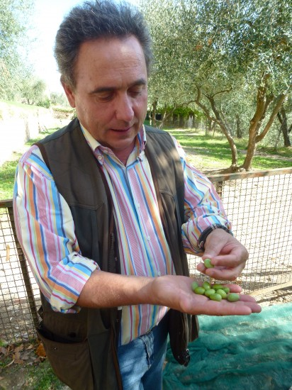 Massimo Donati discusses the olives that are raised to produce the family's signature olio d'olive.