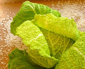 Crinkly leafed Savoy cabbage is milder and more tender than regular white cabbage.