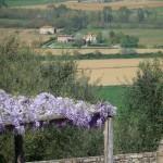 glicine view