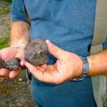 Acqualagna truffle hunter Giorgio Remedia assesses his treasure.