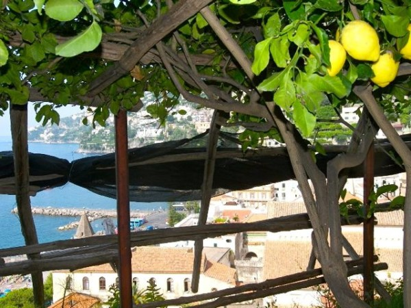 A view of Amalfi from a limonceto.