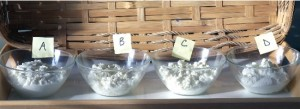 Comparison tasting of homemade ricottas.