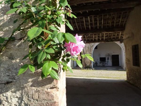 La rosa (rose)