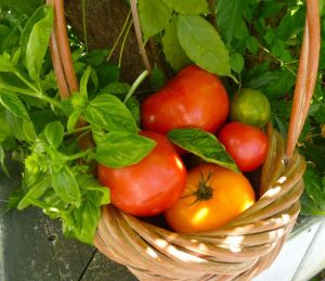 Allow garden or farm tomatoes to ripen at room temperature to develop deep flavor.